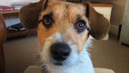 Chutney the Jack Russell, who was companion to Charlotte Barber in her final days, has been stolen f