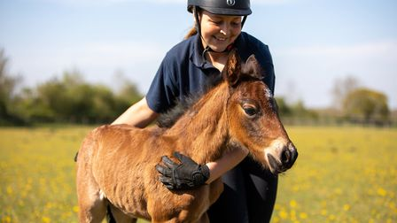 The foal, born at World Horse Welfare in Thetford, that has been named Captain Tom in tribute to Sec