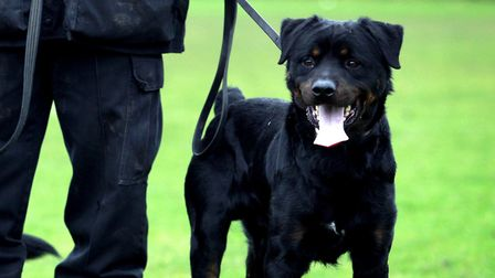 File picture. Police are urging witnesses to come forward after a Rottweiler broke free from its col