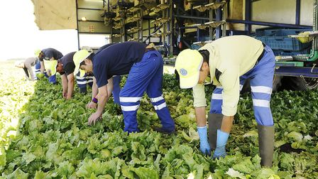 Fenland-based salad grower G's Group has chartered a flight to bring experienced farm workers from R