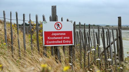 A sign prohibiting entry to a site due to the presence of Japanese Knotweed. Photo: Clive Gee / PA