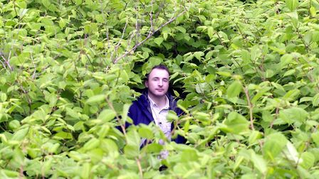 A knotweed officer covered by Japanese knotweed. Photo: Barry Batchelor / PA
