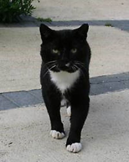 �White Toes� was a beloved village cat in Weybread, Suffolk, described as a familiar sight in the vi