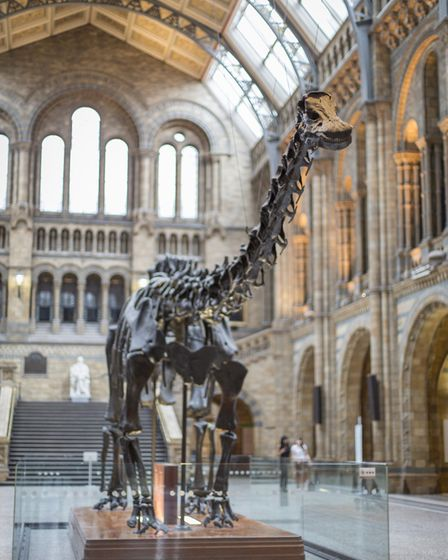 Coronavirus means the visit of Dippy the diplodocus to Norwich has been put on hold. Picture: Truste