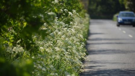 Uncut verges and hedgerows allowing nature to take over along country roads and lanes. Picture: DENI