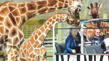 Banham Zoo offers an animal sponsorship scheme to support its work. Picture: Archant