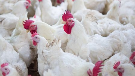 The UK has been declared free of bird flu after an outbreak at a chicken farm near the Norfolk-Suffo