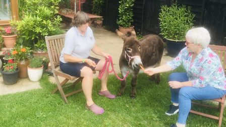 Miniature Donkeys for Wellbeing visiting a Kingsley Healthcare home in Norfolk before lockdown. Phot