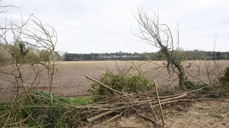The land in Weeting off Brandon Road, where a new crematorium could have been built. Picture: DENISE