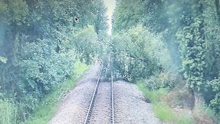 A number of rail services have been cancelled or delayed after a tree fell onto train tracks. Photo: