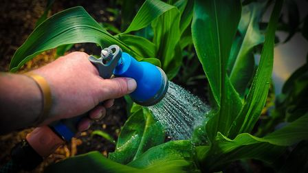 Anglian Water is appealing for gardeners to hang up their hose pipes as water usage soars across the