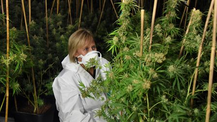 Sgt Angie Youd in one of the four growing rooms at a cannabis factory found at Lenwade. Picture: DEN