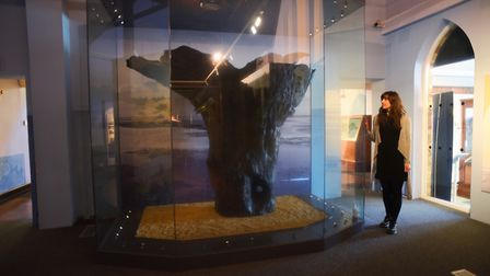 The Seahenge exhibition at the Lynn Museum in King's Lynn. Pictured looking at the great central stu