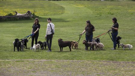 The scheme will allow UEA students to walk dogs on the university campus in Norwich. Picture: UEA