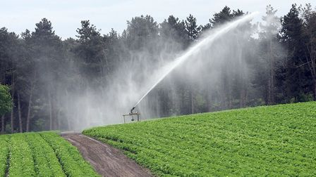 The dry August heatwave has created water worries for East Anglian farmers growing irrigated fruit a