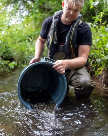 The Environment Agency fisheries team release 10,000 dace into the River Thet. Picture: Environment