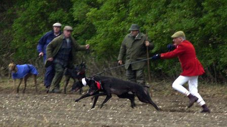 The slipper releases two greyhounds during the coursing meet near Swaffham before the sport was bann