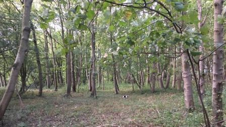 An area of land at Haggard Wood in Flixton is for sale by auction. Picture: Auction House East Angli
