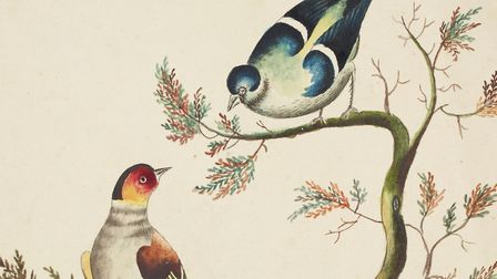 Drawing of birds from the Eaton collection Picture: Norfolk Record Office