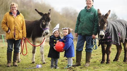 George the donkey at Elsing has some new friends. Pictured with the new donkeys (L) Cameron and Craw