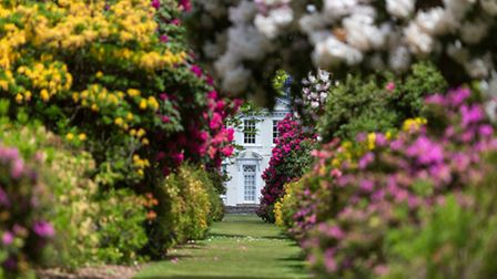 The vibrant colours on display at Stody Lodge Gardens. (Picture: Steven Brooks)