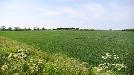 Green fields off Rudham Stile Lane in Fakenham, where there are plans for 950 new homes. Picture: I