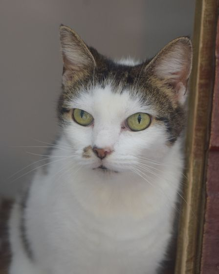 Twelve year old Sasha is looking for a new home. She is currently being looked after by the Cats Pr