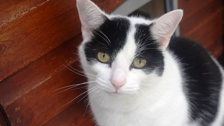 Seven year old Splodge is looking for a new home. He is currently being looked after by the Cats Pro