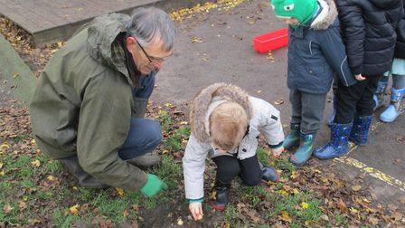 Pupils at Mattishall Primary School planted an array of daffodil bulbs in their outdoor garden. Phot