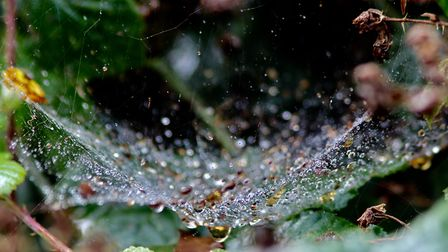 Raindrops sparkling on a spiderweb in the hedgerow Photo: Hilary Gostling