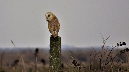 On walking back from Wells along the coastal path to Stiffkey met this charming sight Photo: Ann Hol