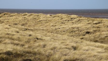 Beautiful and lonely Holme Dunes on a glorious February morning Photo: Martin Sizeland