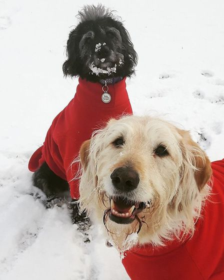 Willow and Ruby enjoy fun in the snow at Longham. Picture: ALICIA LESTAT-FARRELL