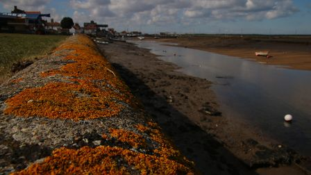 Lichen growing on a low wall at East Quay , Wells-Next-The-Sea Photo: Martin Sizeland