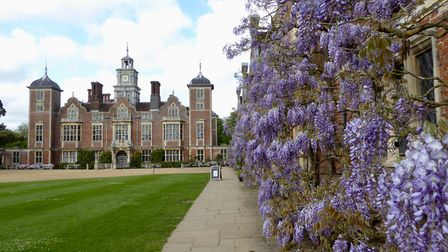 Blickling Hall and it's wonderful wisteria tonight. Photo: Julie Frost