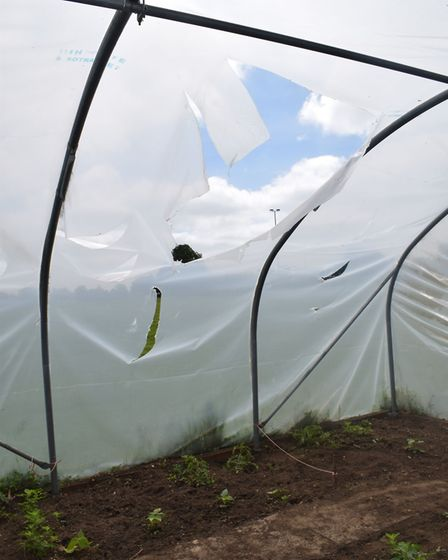 Vandals attacked Neatherd High School's garden during the half term holiday Photo: Neatherd High Sch