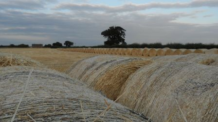 Straw bales in the evening. Photo: John Knights