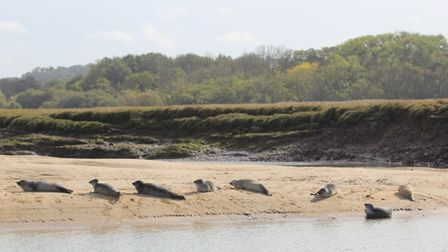 Seals enjoying the Autumn sunshine at Titchwell. Picture: Simon Bamber