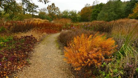 Autumn at Pensthorpe. Picture: Lesley Buckley
