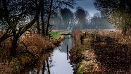 Sculthorpe moor on an autumn day. Picture: Wayne Smith