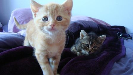 Two former Dereham Cats Protection adoption centre residents.Photo: SUPPLIED