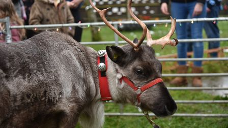 Nursery children at Blossoms Childcare get a visit from some reindeer during their Christmas party.B