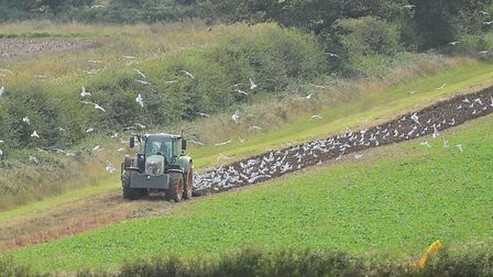 A tractor ploughing a field. Picture: Ian Burt