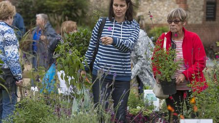 Visitors browsing the flora and foliage on offer at last year's Specialist Plant Day at Pensthorpe N