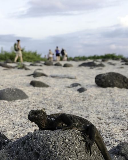 Undated Handout Photo of an iguana on a beach in the Galapagos Islands. See PA Feature TRAVEL Galapa