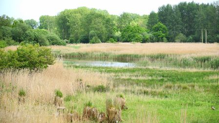 The Sculthorpe Moor Community Nature Reserve. Pictured is the view from the Tower Hide. Picture: Ian
