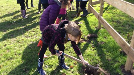 Schoolchildren planting trees to fight climate change. Pictures: Mattishall school
