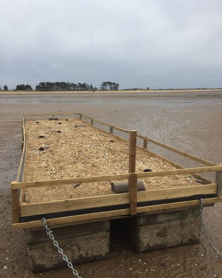The raft made for little terns in Wells Harbour. Picture: ROBERT SMITH