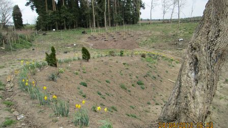 Birch saplings in 2013, they were planted at the stie of the unofficial village tip in Swannington.