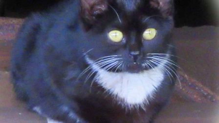 Flash the cat has been living at the Mid Norfolk Railway station in Dereham. Photo: Mid Norfolk Rail
